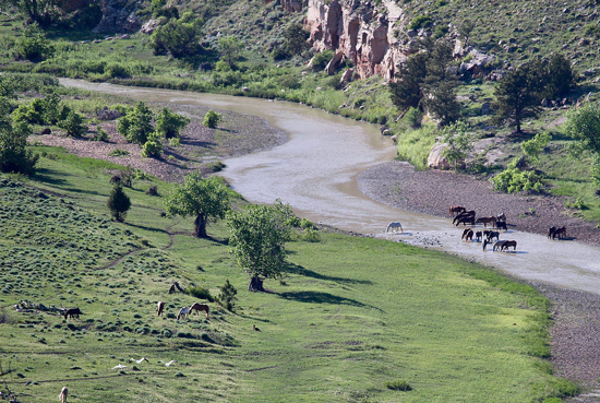 Picture of Black Hills Wild Horse Sanctuary