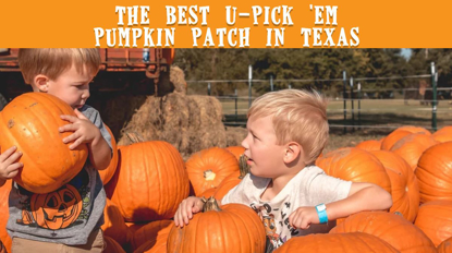 Pumpkin Patch - Things To Do Near Me